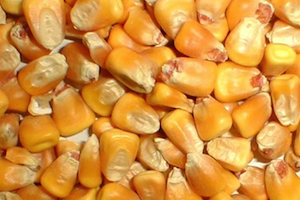 corn-products-page