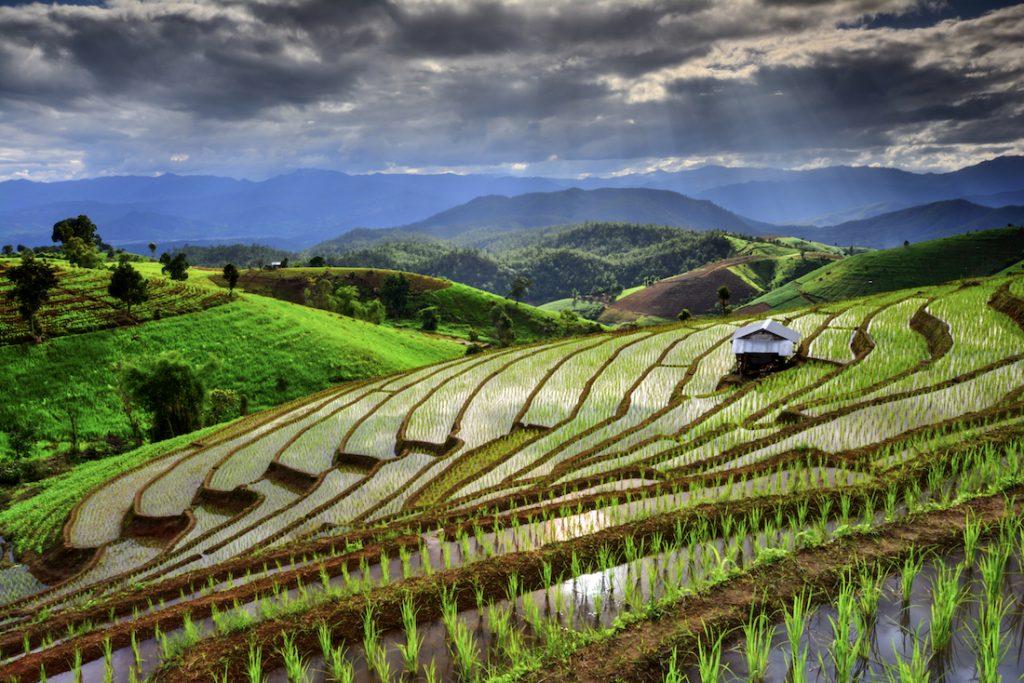 Thai Rice Banner
